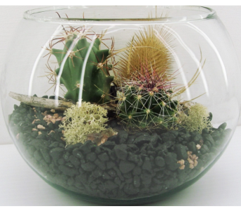Mini Cactus Terrarium in North Vancouver BC, Special Moments Flowers And Gifts