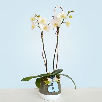 Oh Baby Orchid - Baby Boy in Dallas TX, Dr Delphinium Designs & Events