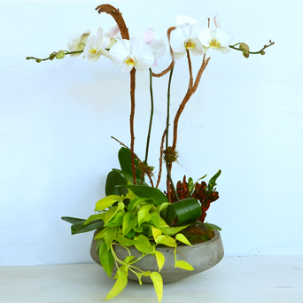 The Atelier Orchid & Plant Design in Dallas TX, Dr Delphinium Designs & Events