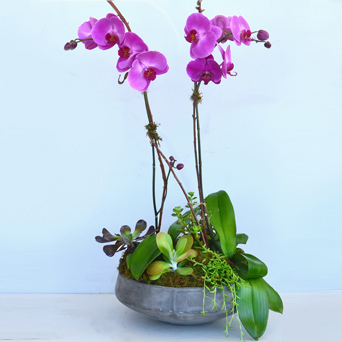 Art Nouveau Orchid & Succulent Design in Dallas TX, Dr Delphinium Designs & Events
