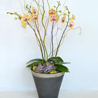 Heirloom Orchid Collection - Luxury Upgrade in Dallas TX, Dr Delphinium Designs & Events