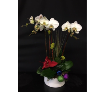 Orchid Sparkles in Oakland CA, J. Miller Flowers and Gifts