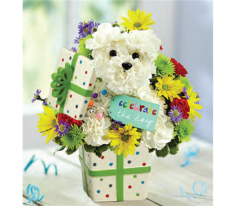 Party Pooch in El Paso TX, Executive Flowers