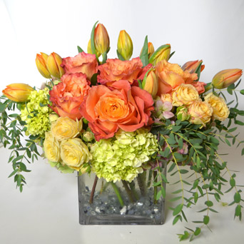 Coral Floral in Dallas TX, Dr Delphinium Designs & Events