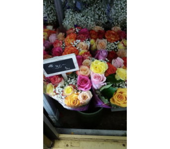 Rose Dozen Special in Boston MA, Exotic Flowers