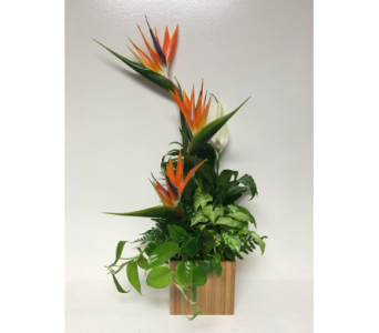 Living Planter with Fresh Cut Birds-of-Paradise in Wyoming MI, Wyoming Stuyvesant Floral