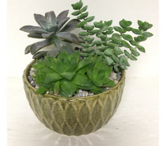 Succulents in Green Ceramic - 4 Sizes Available in Wyoming MI, Wyoming Stuyvesant Floral