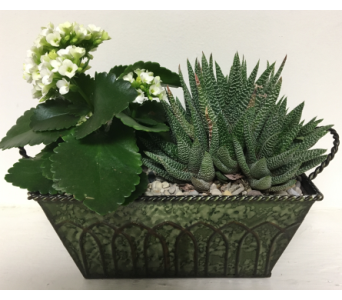 Succulent Garden in Metal Planter - 3 Sizes Availa in Wyoming MI, Wyoming Stuyvesant Floral