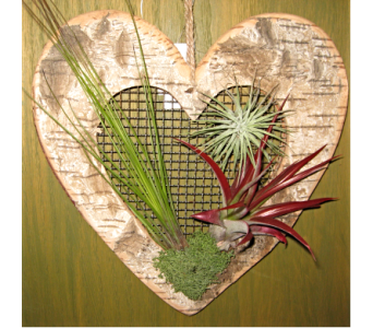 Heart Shape Air Plant in Toledo OH, Myrtle Flowers & Gifts