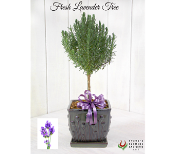 Fresh Lavender Tree in Indianapolis IN, Steve's Flowers and Gifts