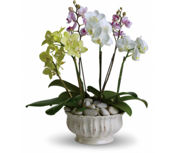 California Orchid Plants, From: in Mayfield Heights OH, Mayfield Floral
