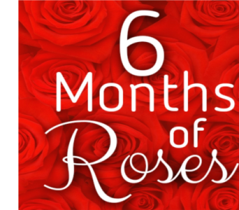 6 Months of Roses in Needham MA, Needham Florist