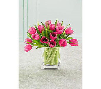 SPRING PINK TULIPS in Bellevue WA, CITY FLOWERS, INC.