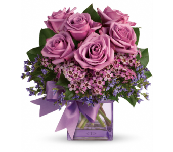Lavender Bliss in Moline IL, K'nees Florists