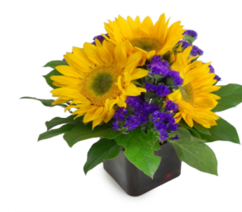 Sunflower Delight in Nashville TN, Emma's Flowers & Gifts, Inc.