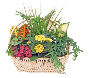 Deluxe Garden in Detroit and St. Clair Shores MI, Conner Park Florist