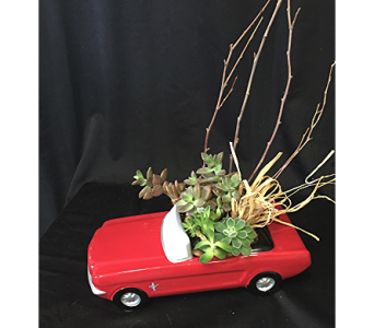 Succulents & Mustang in Newton KS, Designs By John Flowers & Tuxedos, Inc