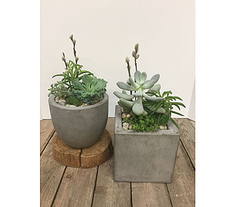 Small Succulent Planters in Saskatoon SK, Bill's House of Flowers