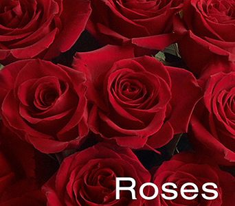 Roses, Roses, Roses...NYC in New York NY, Starbright Floral Design