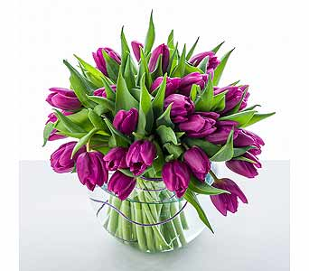 Regalia Tulips in New York NY, Starbright Floral Design