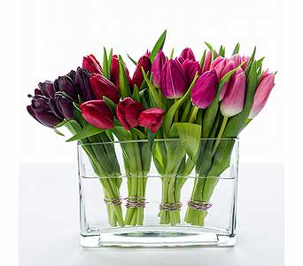 Tulips' Kiss in New York NY, Starbright Floral Design