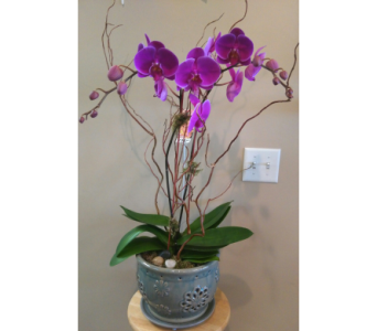 Magnificent Orchid  in Tampa FL, Buds Blooms & Beyond