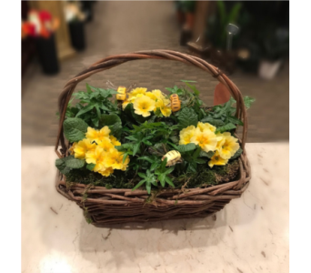 Bee-utiful Primrose Basket in Princeton, Plainsboro, & Trenton NJ, Monday Morning Flower and Balloon Co.