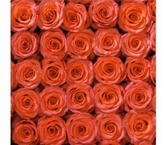 Orange Coral Roses in Jonesboro AR, Posey Peddler