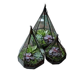 Teardrop Terrarium in Detroit and St. Clair Shores MI, Conner Park Florist