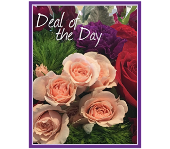 Deal of the Day in Charlottesville VA, A New Leaf Florist