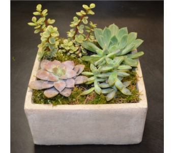 Zen Succulent Garden in Stone in Princeton, Plainsboro, & Trenton NJ, Monday Morning Flower and Balloon Co.
