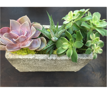 Stone Succulent Garden in West Los Angeles CA, Sharon Flower Design