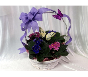 Butterfly and Violet Basket in Hollidaysburg PA, Warner's Florist Gifts & Greenhouse