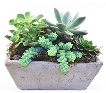 Succulent Garden in Spartanburg SC, A-Arrangement Florist