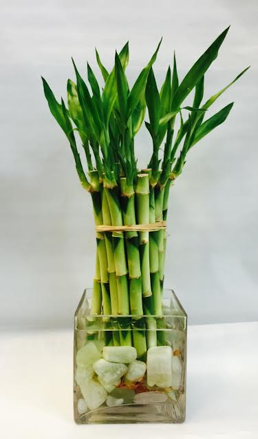 10 Jade Stone Lucky Bamboo in West Los Angeles CA, Sharon Flower Design