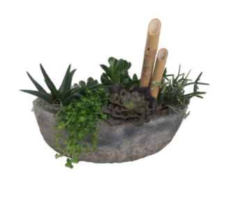 Succulent Boat in Guelph ON, Patti's Flower Boutique