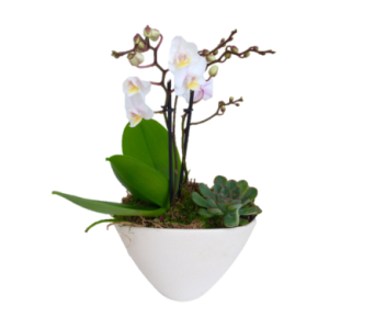 Medium Orchid Planter in Guelph ON, Patti's Flower Boutique