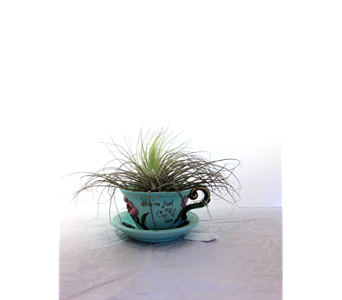 Air Plant Tea Time in Jackson MI, Brown Floral Co.