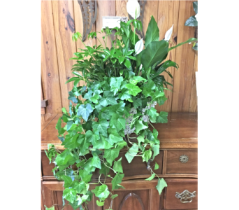 Triple Plant Basket in Myrtle Beach SC, La Zelle's Flower Shop