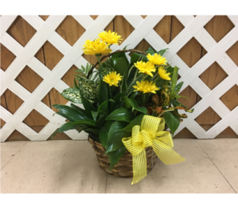 Dish Garden with Fresh Flowers in Purcellville VA, Purcellville Florist