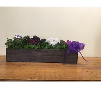 Violet Window Box in North Bay ON, The Flower Garden