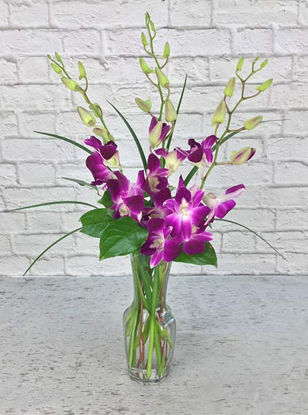 Orchids Delight in Manchester NH, Chalifour's Flowers