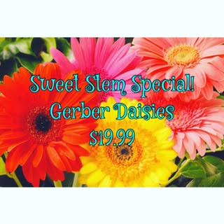 This Week''s Sweet Stem Special - Gerber Daisies! in Newport AR, Purdy's Flowers & Gifts