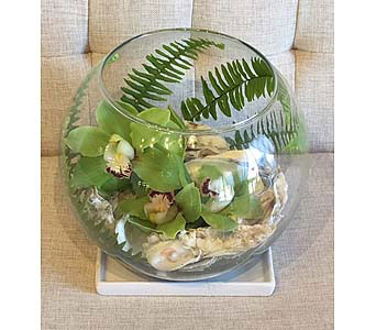 Cymbidium Terrarium in Charleston SC, Tiger Lily Florist Inc.