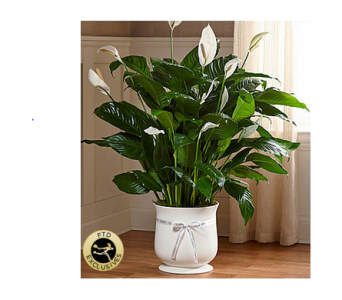The FTD� Large Comfort� Planter in Manchester MD, Main St Florist Of Manchester, LLC