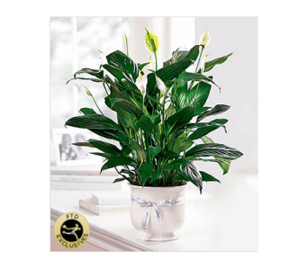 The FTD� Comfort Planter in Manchester MD, Main St Florist Of Manchester, LLC