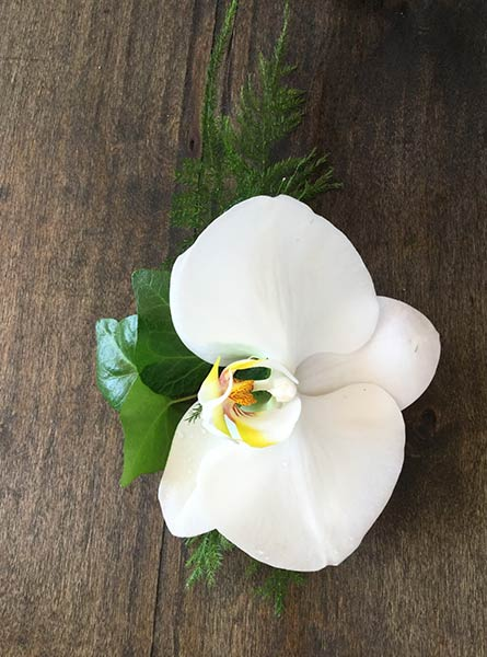 Phalaenopsis Orchid Boutonniere in Denver CO, Lehrer's Flowers