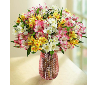 Spring Peruvian Lilies: 50-100 Blooms in Huntington WV, Archer's Flowers and Gallery