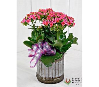 Kalanchoe Plant in Indianapolis IN, Steve's Flowers and Gifts