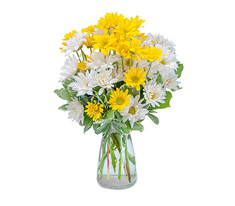 Dazed Daisies in Crete IL, The Finishing Touch Florist